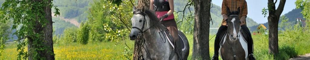 krynica-konie