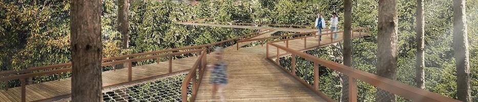 Stary Sącz planuje atrakcję: spacer w koronach drzew...