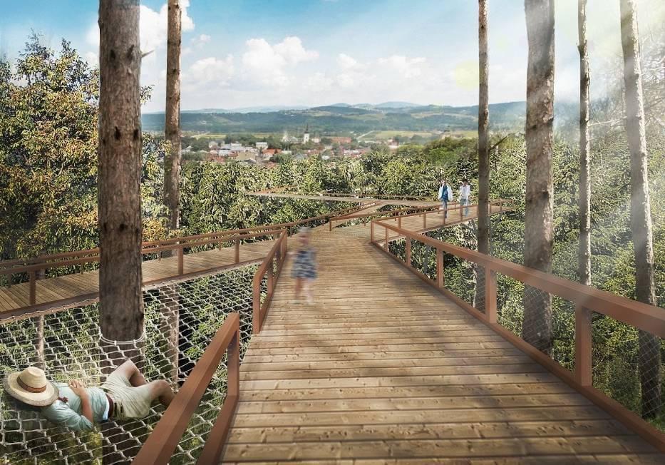 Stary Sącz planuje atrakcję: spacer wkoronach drzew...