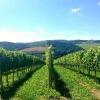 winnica-chodorowa